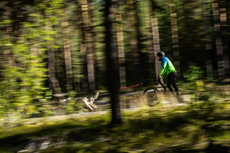 Fun ride in nature in Skellefteå