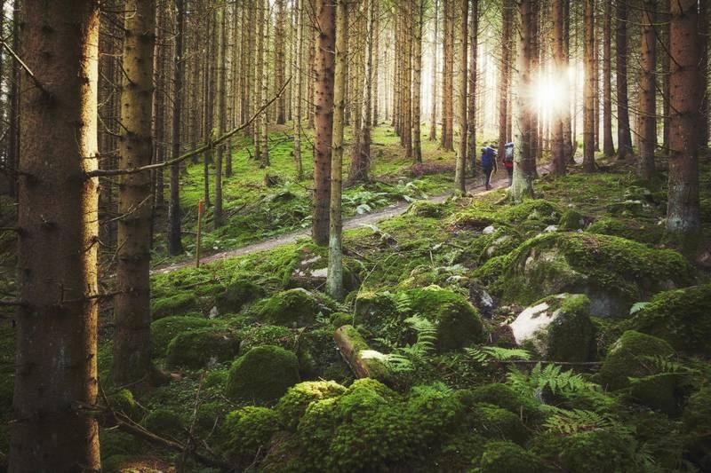 Wanderungen im Wald